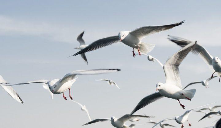 seagull-banner